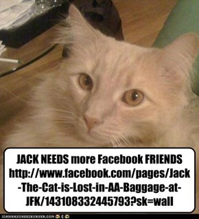 JACK NEEDS more Facebook FRIENDS http://www.facebook.com/pages/Jack-The-Cat-is-Lost-in-AA-Baggage-at-JFK/143108332445793?sk=wall