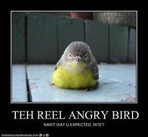 TEH REEL ANGRY BIRD