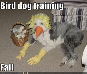 Bird dog training  Fail