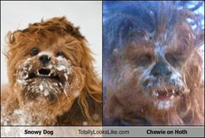 Snowy Dog Totally Looks Like Chewie on Hoth