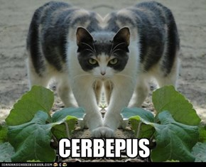 CERBEPUS