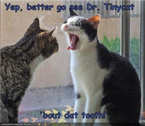 Yep, better go see Dr. Tinycat   'bout dat tooth!