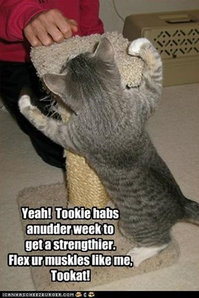 Yeah!  Tookie habs anudder week to  get a strengthier. Flex ur muskles like me, Tookat!