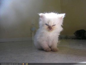 Cyoot Kitteh of teh Day: Ai Has a Grumpee