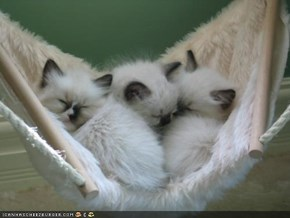 Cyoot Kittehs of teh Day: Hangin' in the Hammock