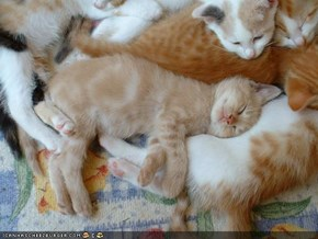 Cyoot Kittehs of teh Day: Purr Pile