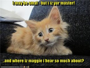 i may be smal - but i iz yur master!  ..and where iz maggie i hear so much about?