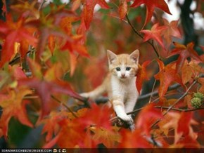 Cyoot Kitteh of teh Day: Autumn Is Coming