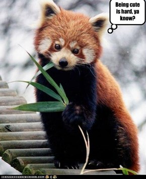 Cutist red panda on da planet!!