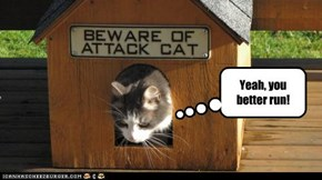 Beware of Attack Cat