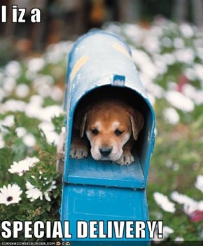 I iz a   SPECIAL DELIVERY!