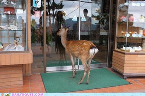 Acting Like Animals: So a Deer Walks Into a Tea Shop...