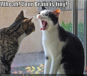 Whoah! Your Brain is tiny!