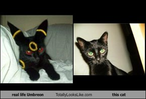 real life Umbreon Totally Looks Like this cat
