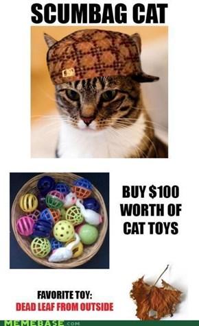 Scumbag Cat