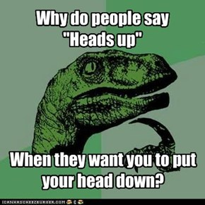 Philosoraptor: Heads Up