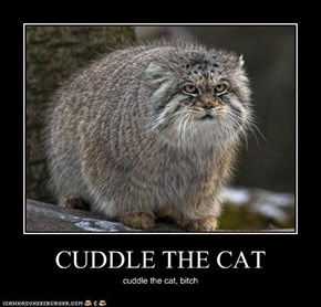 CUDDLE THE CAT