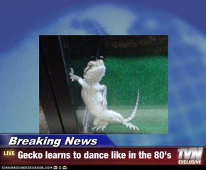 Breaking News - Gecko learns to dance like in the 80's