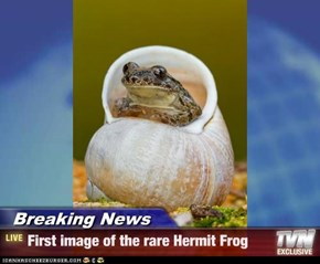 Breaking News - First image of the rare Hermit Frog