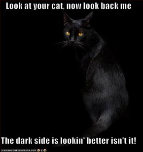 Look at your cat,