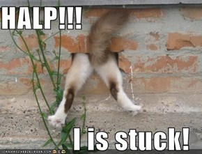 HALP!!!  I is stuck!