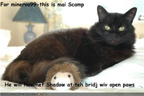 For minerva99-this is mai Scamp  He will hav met Shadow at teh bridj wiv open paws