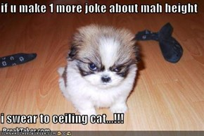 if u make 1 more joke about mah height  i swear to ceiling cat...!!!