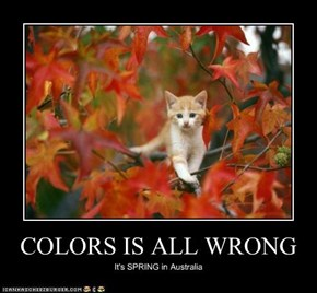 COLORS IS ALL WRONG