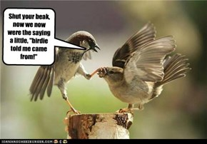 "Shut your beak, now we now were the saying a little, ""birdie told me came from!"""