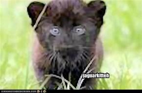 jaguarkitteh