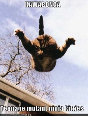 KAWABONGA  Teenage mutant ninja kitties