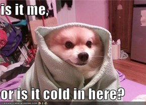 is it me,  or is it cold in here?