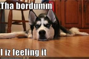 Tha bordumm  I iz feeling it