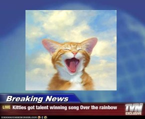 Breaking News - Kitties got talent winning song Over the rainbow