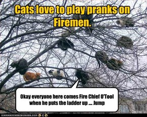 Cats love to play pranks on Firemen.