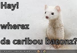 Hay! wherez da caribou baconz?