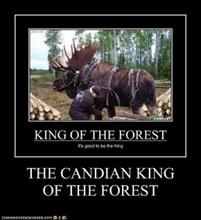 THE CANDIAN KING  OF THE FOREST