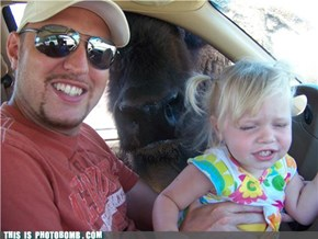 Don't You Hate It When a Buffalo Interrupts?