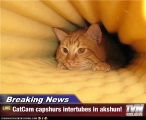 Breaking News - CatCam capshurs intertubes in akshun!