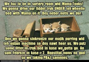 Majik Kittehz haz plan!  For Tookat