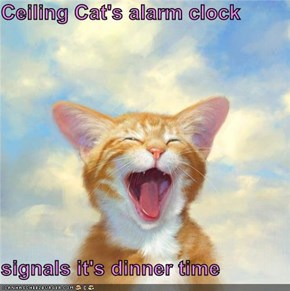 Ceiling Cat's alarm clock  signals it's dinner time