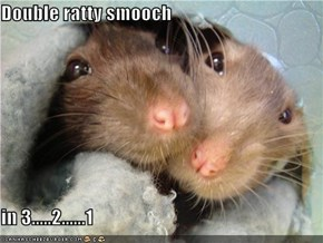 Double ratty smooch   in 3.....2......1