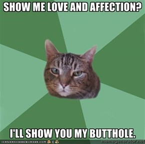 MemeCats: Love and Affection, Kitteh Style