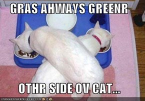 GRAS AHWAYS GREENR  OTHR SIDE OV CAT...