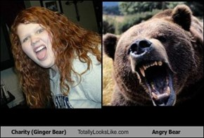 Charity (Ginger Bear) Totally Looks Like Angry Bear