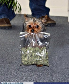 Crunk Critters: Doggy Dime Bag