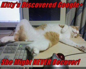 Kitty's Discovered Google+  She Might NEVER Recover!