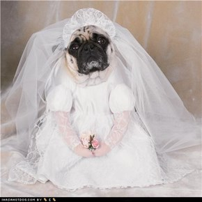 Dogtober 2011: Here Comes the Bride