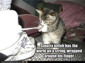 Sinatra kitteh has the world on a string, wrapped around his finger