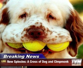 Breaking News - New Spiecies: A Cross of Dog and Cimpmonk
